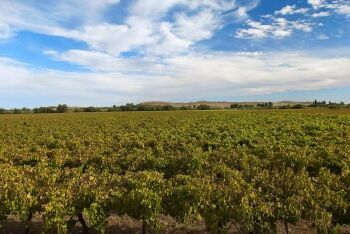 Vineyards on Orange River Wine Route, Upington, Northern Cape